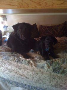 Mollie & Lady